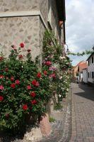 Bechtolsheim_Sickinger2